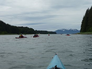 a group of kayakers paddling