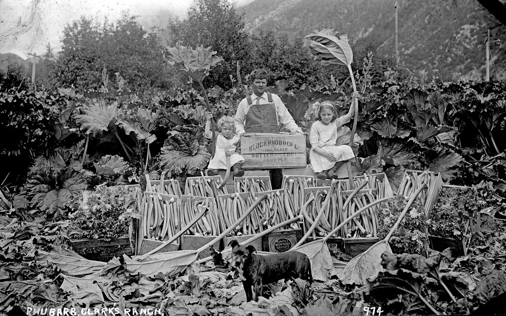 "Two young girls and a man pose with rhubarb. Text reads ""Rhubarb, Clark's Ranch."""
