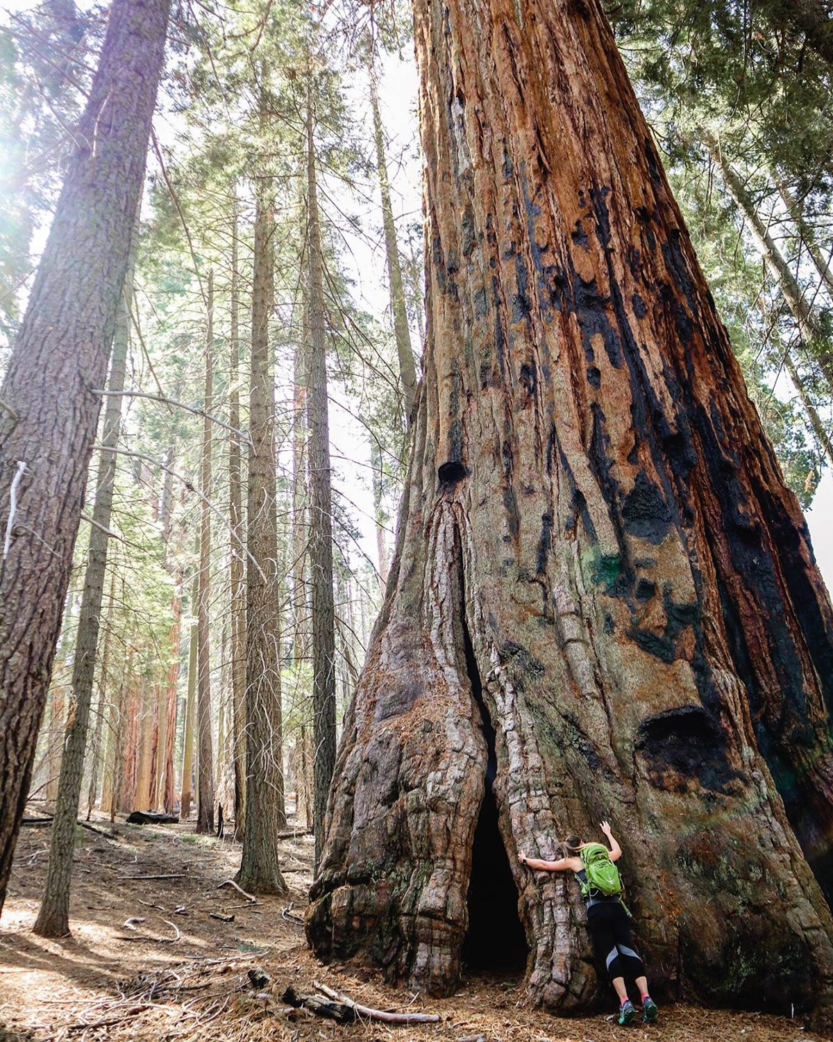 hiker hugs giant sequoia tree