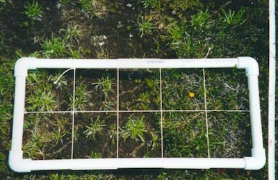 A rectangle of PVC pipe divided by sting into 10 squares marks out a quadrant of alpine plants.