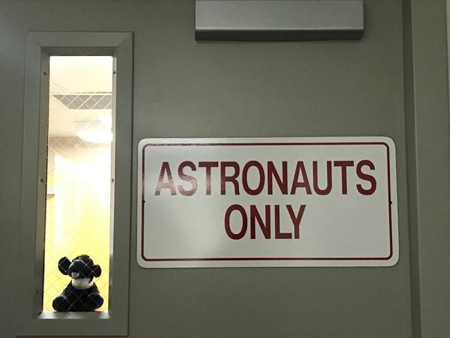 "toy dog looking through door that says ""astronauts only"""