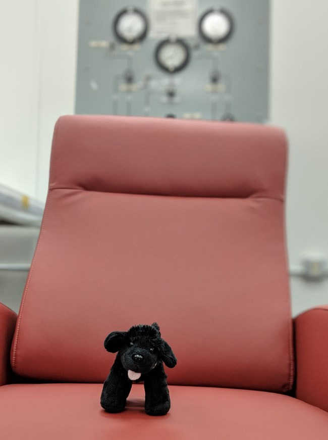 Toy dog on chair