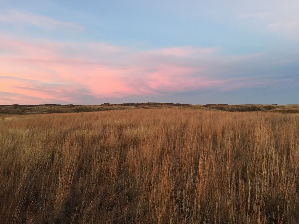 Field of tall grass with pink sky in the distance.
