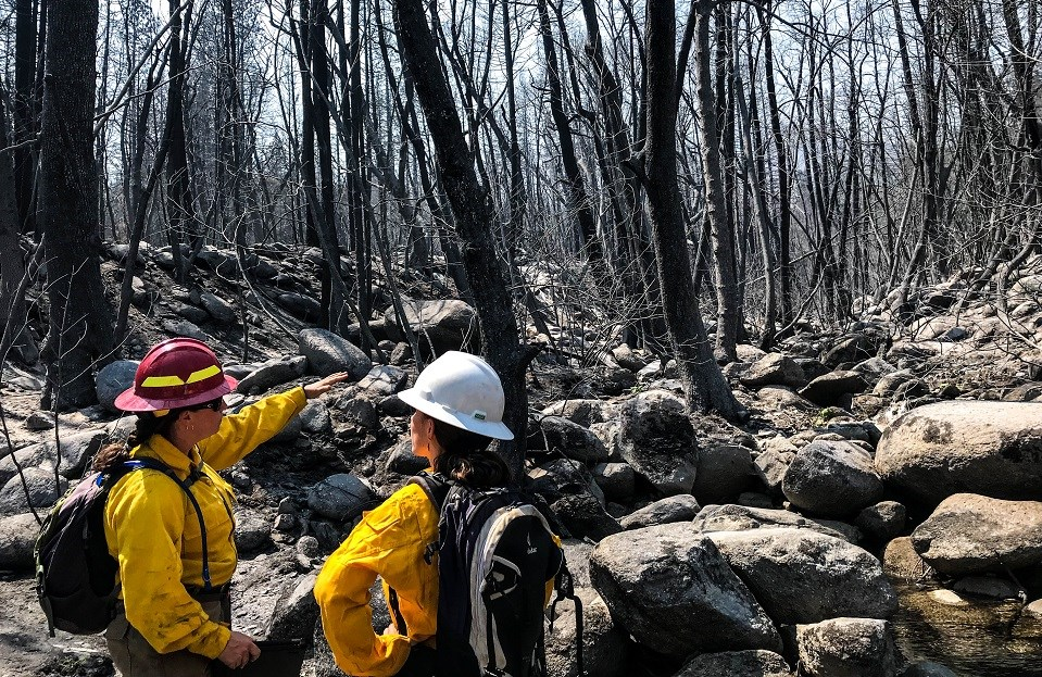 Two people surveying burned trees in a rocky area.