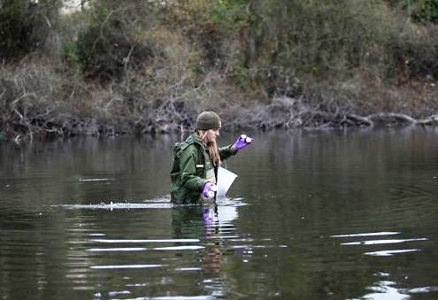 Water quality technician wades through deep stream while conducting water quality monitoring at Mountain Lake