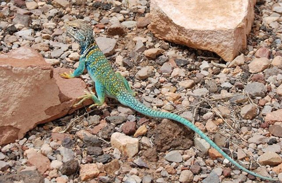Green and yellow-colored lizard