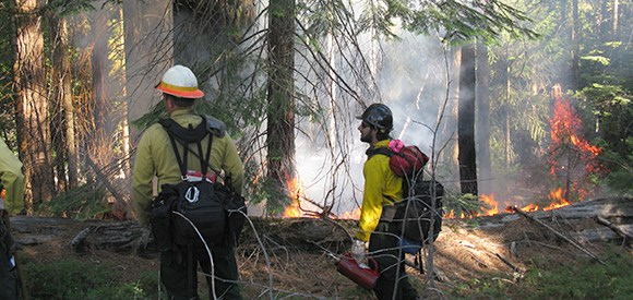 Two firefighters stand near a fire burning in a forested area.