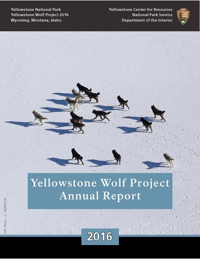 YELL Wolf Report Cover - 2016