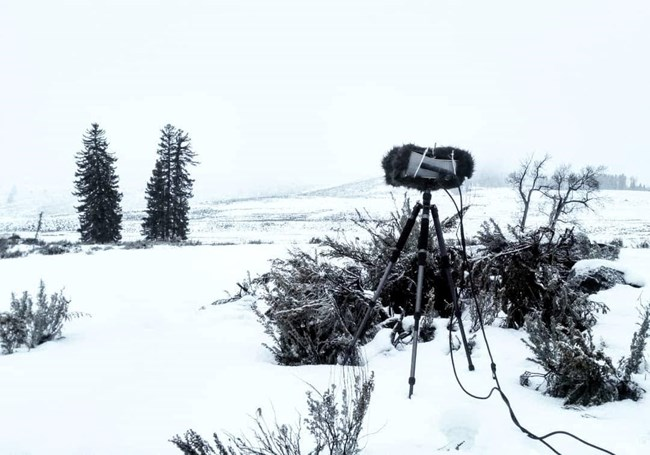 Binaural audio recording set up is shown in a snowy winter landscape at Yellowstone NP