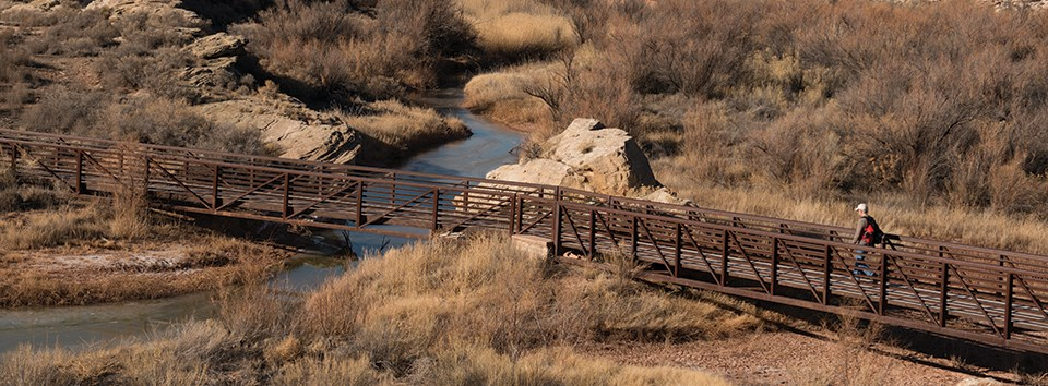 a footbridge crosses a waterway with tamarisk growing on the sides