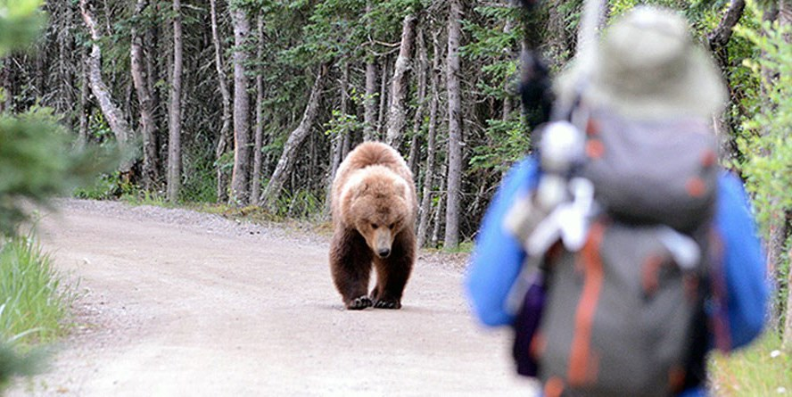 A hiker encounters a bear