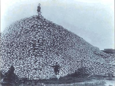 An old, black and white photo of a man standing atop a massive pile of bison skulls, another man down on the ground in front of the pile.