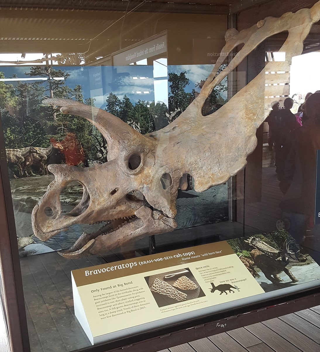 Dinosaurs of the National Park Service (U S  National Park