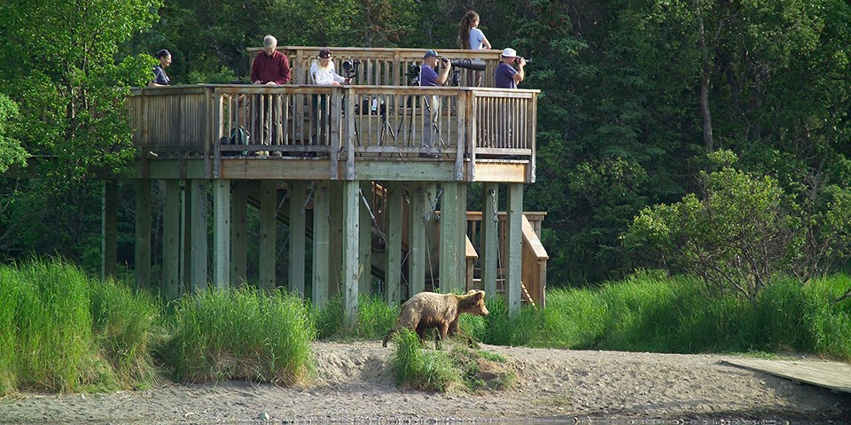 Visitors stand on a platform watching a bear move on the ground below