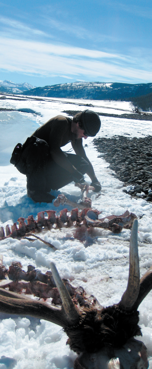 A person kneels and examines a carcass in a snowy landscape.