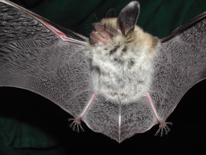 Bat Inventory Of Golden Gate National Recreation Area