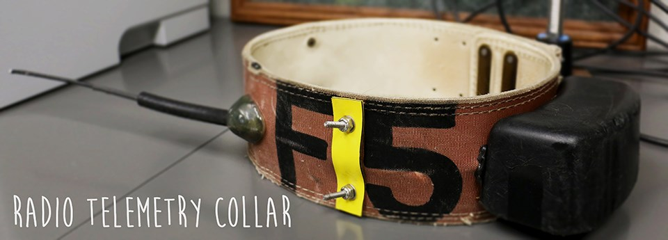 a large collar with antennae and the words radio telemetry collar written over the image