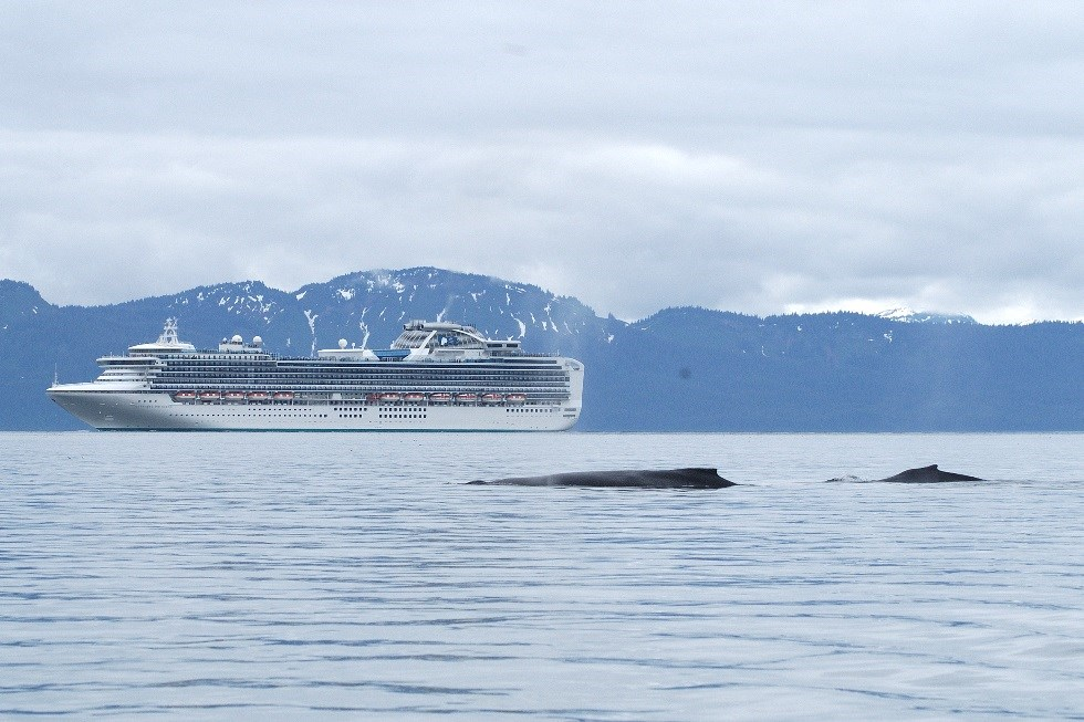 A cruise ship with a humpback whale in the foreground.