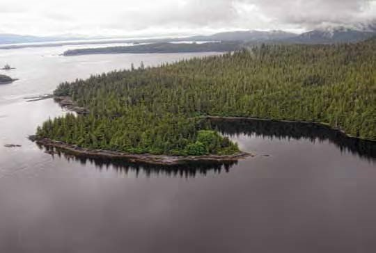 Aerial view of a forested peninsula