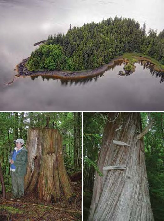Composite of three images. Top: aerial view of forested peninsula. Bottom: a woman standing with a tree; a tree with two boards nailed to it