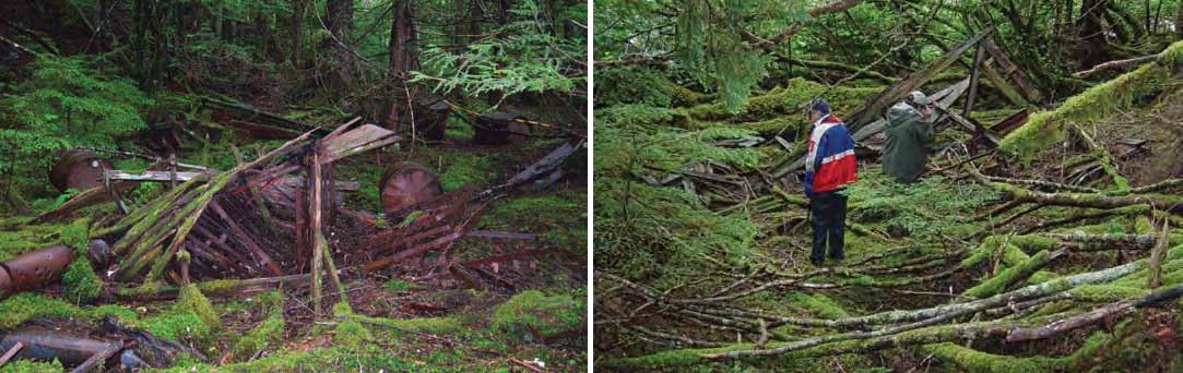 Composite of two images. Left: Collapsed wooden building with rusted metal.  Right: people standing in moss covered downed trees.
