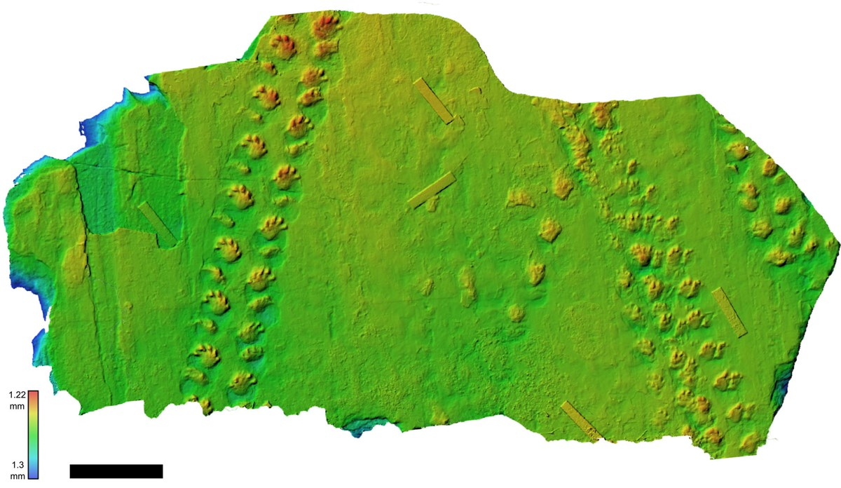 False color depth map of track-bearing boulder