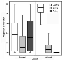 Figure of Kittlitz's Murrelet behavior in the presence and absence of vessels