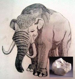 [drawing] Illustration of mastodon with inset photo of mastodon tooth.