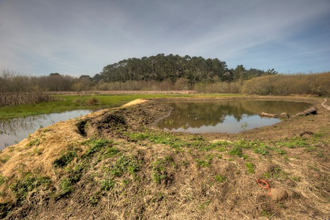 Wide shot of ponds built for red- legged frogs at Muir Beach