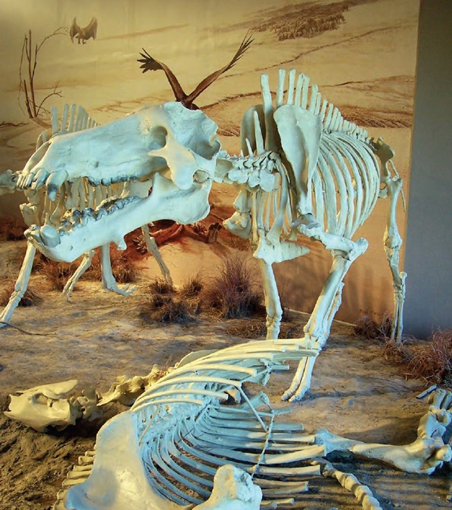 agate fossil beds diorama with skeletons