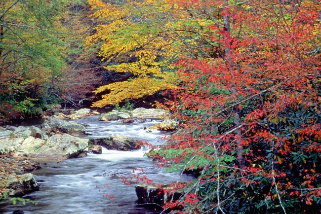 Autumn in Cataloochee Creek at Great Smoky Mountains NP