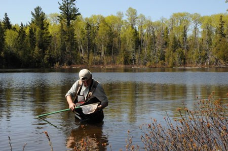 Park ranger searching for larval dragonflies on Lake Harvey