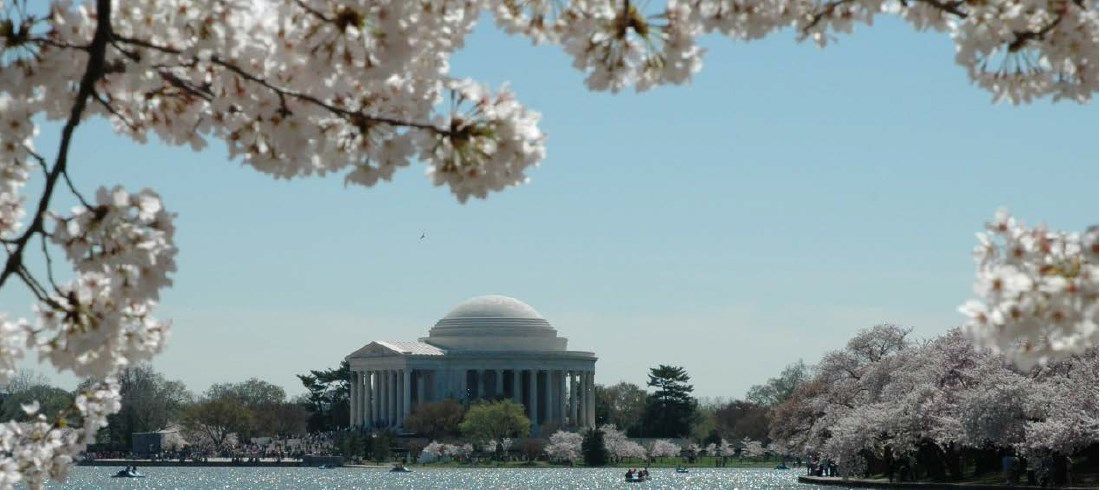 Cherry blossom trees framing Jefferson Memorial in the background.