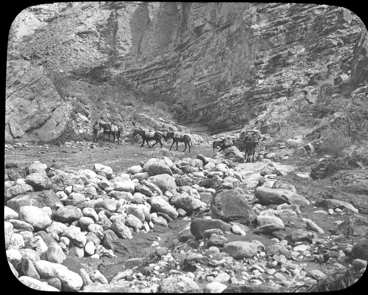 Historic image of packed burros crossing canyon riverbed.