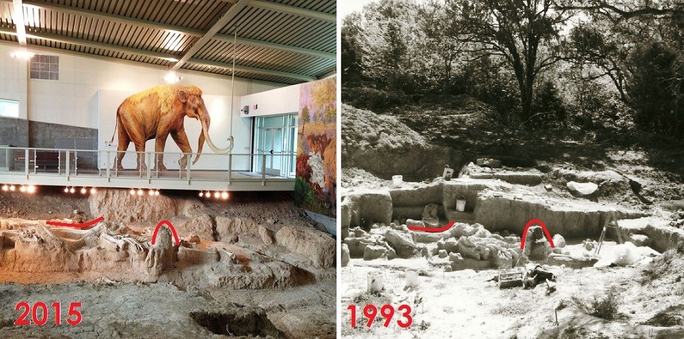 Comparison mammoth fossil in 2015 and 1993