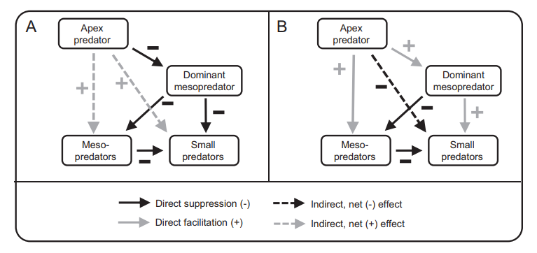 two diagrams indicating relationships between apex predators and smaller  predators, explained in the page text