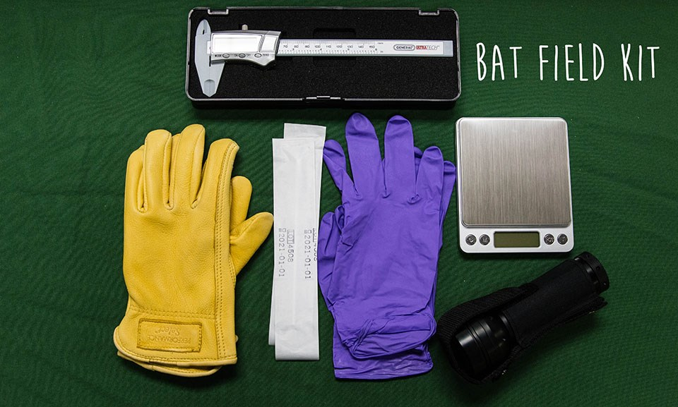 yellow and purple gloves, UV flashlight, and calipers with the words Bat Field Kit written over the photo