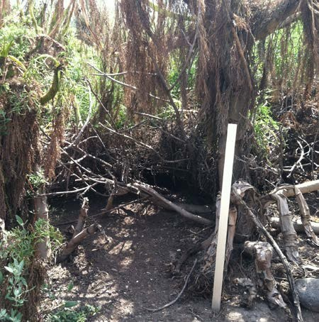 Burrow beneath a tangle of roots and vegetation