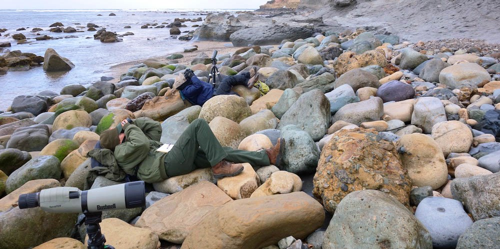 Two people laying on boulders between a cliff and the ocean, looking up with binoculars and scopes