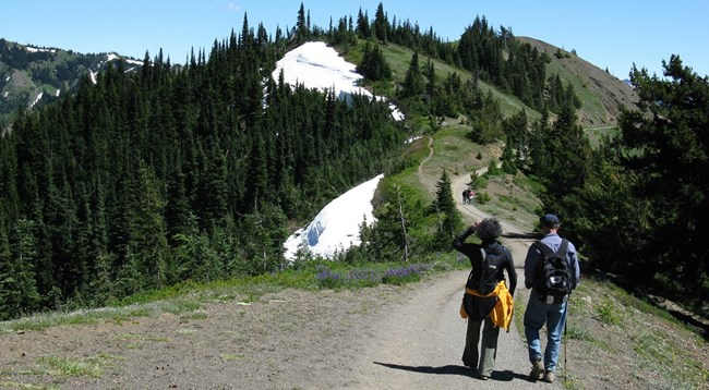 Hikers on the Hurricane Hill Trail
