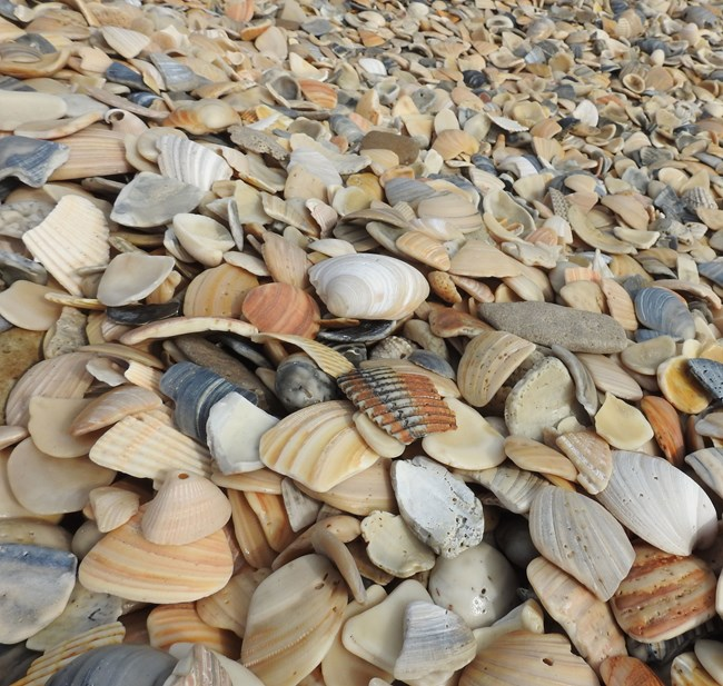 broken and rounded seashells