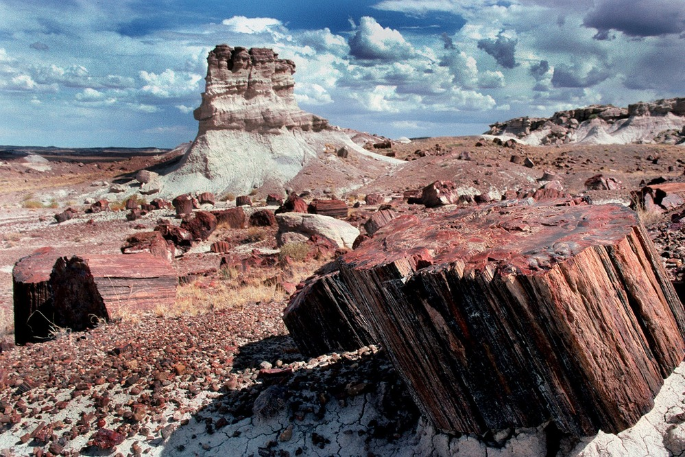 Petrified wood and butte