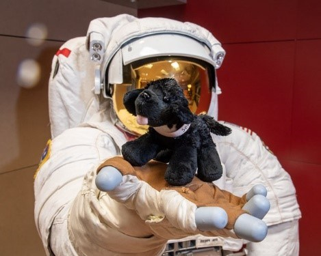 toy dog on astronaut suit