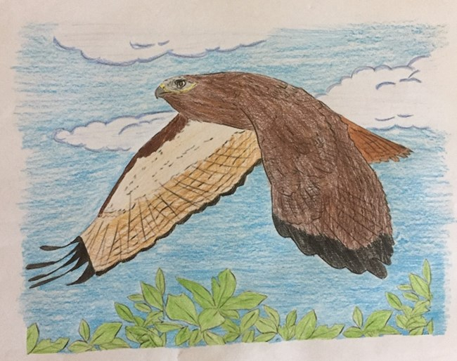 A photo of the complete craft: a hawk colored in with crayons of different shades of brown, the sky colored blue and leaves colored green