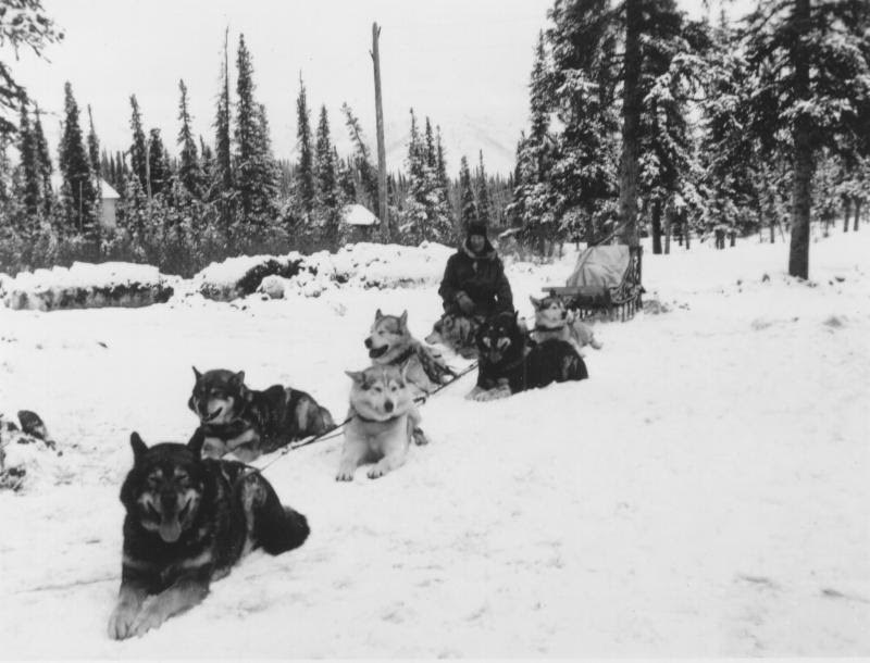 a man kneeling by a team of sled dogs in a snowy forest