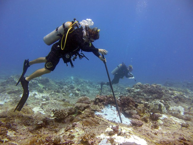Surveying coral at War in the Pacific National Historical Park