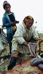 An Alaskan Native woman and child process moose intestines for later use.