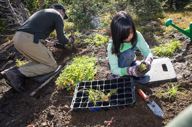 A child helps to replant a meadow that had been used as a campground.