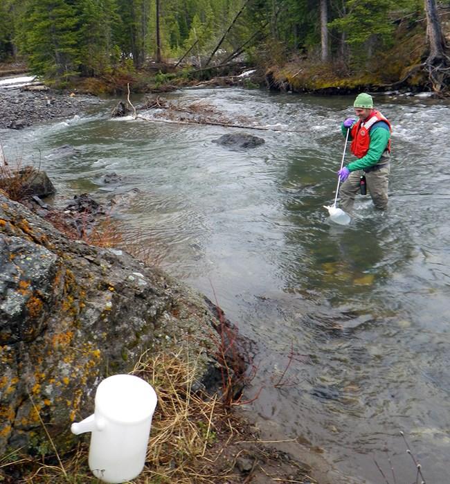 Soda Butte Creek - A Success Story! (U S  National Park Service)