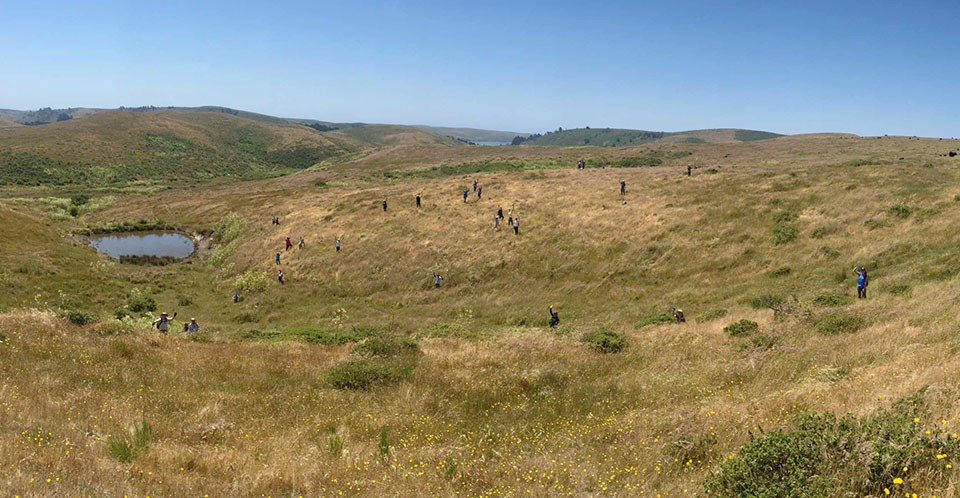LINC volunteers, appearing tiny in a vast Point Reyes landscape, wave at the camera